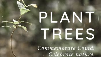 Plant a tree in Frodsham – to commemorate COVID-19