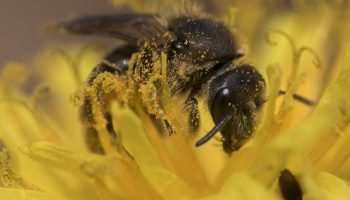 Will Frodsham support the call to save the bee?